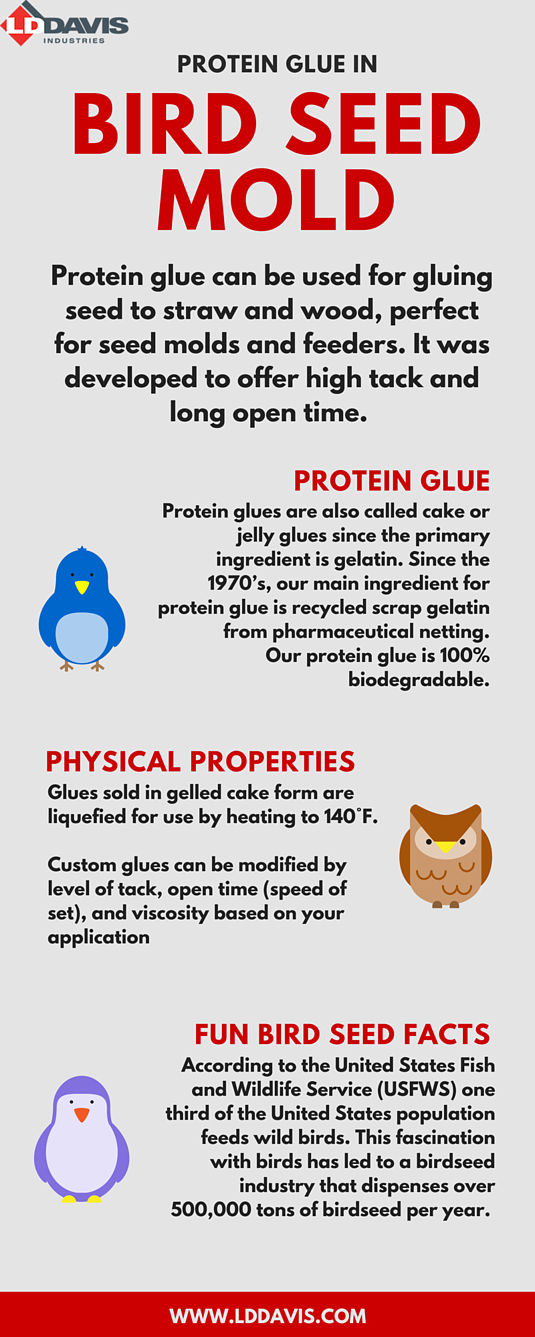 Protein Glue in Bird Seed Molds