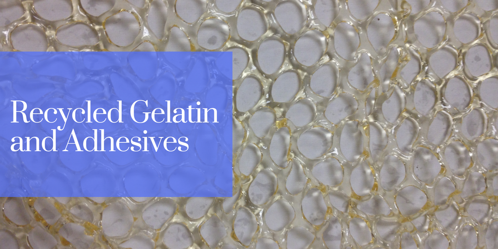 Recycled Gelatin and Adhesives